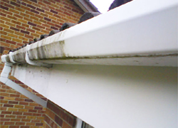 Gutters, windows and driveway cleaning in the Chester area.